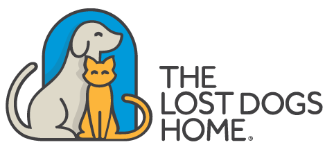 lost_dogs